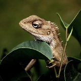 Lizards, Turtles, & Snakes