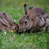 Rabbits, Gerbils, Ferrets, & Hamsters