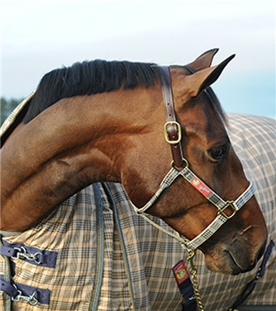 """5/A Baker® Breakaway Halter with Full Leather Crown 1"""""""