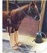 Jacks Whirlpool Boots