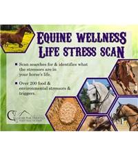 Glacier Peak Holistics Equine Wellness Life Stress Scan