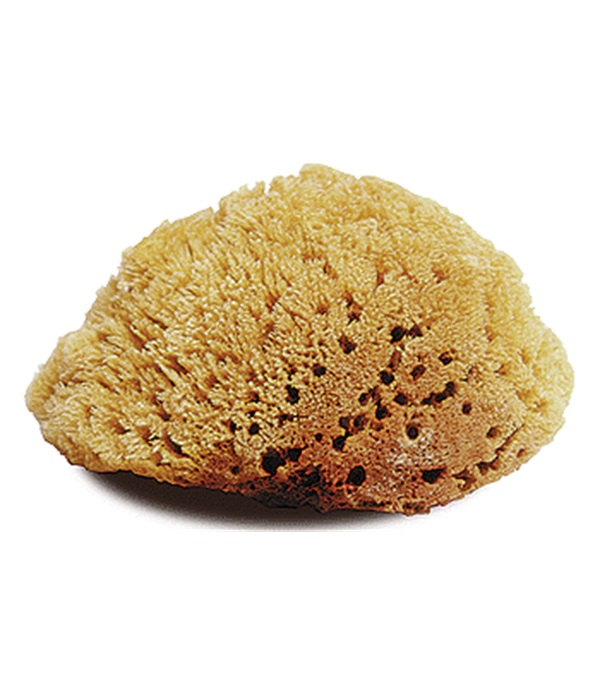 Natural Body Sponge Large
