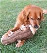 Zippy Paws Burrow Log with Chipmunks Plush Dog Toy