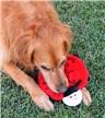 Zippy Paws Squeakie Crawler Plush Dog Toy